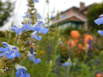 Jardim da Casa de Monet em Giverny