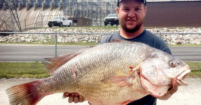 Strangest-Fish-Freshwater-Drum