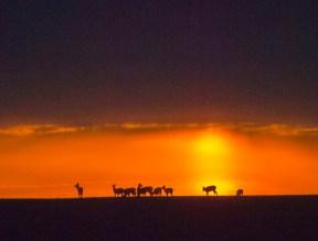February - at the Chippewa Prairie.
