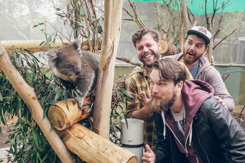 bear's den koala