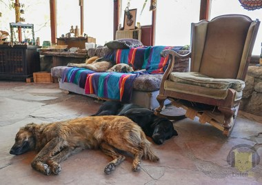 dogs rest before the party begins