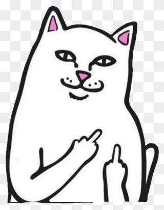 Cat Holding Up Middle Finger : holding, middle, finger, Middle, Finger, Download, PinClipart