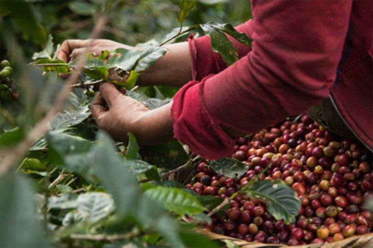 Cafeteros en Colombia aplazan paro nacional por crisis del sector