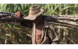 En marcha zafra azucarera en Cuba
