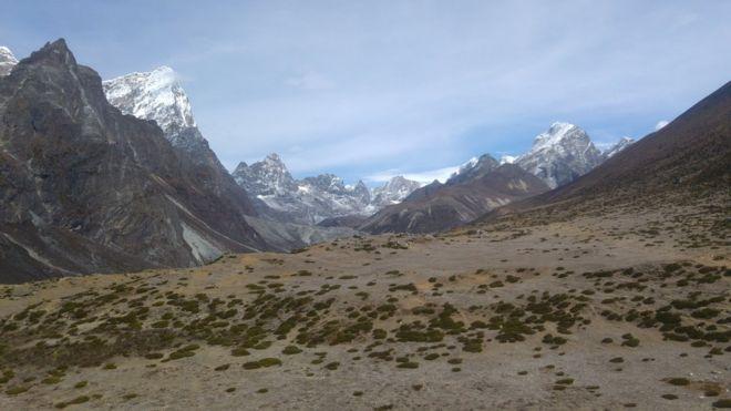 Cómo la vida vegetal se está expandiendo en el Himalaya (y por qué preocupa a los científicos)