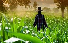 Destaca FAO contribución de la agricultura al PIB mundial