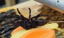 Pic Of Spider-758560.Jpg