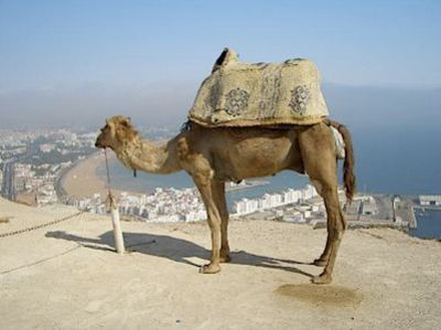 camel-on-the-kasbar.jpg