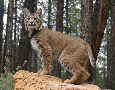 Amazing Abilities Of Cats
