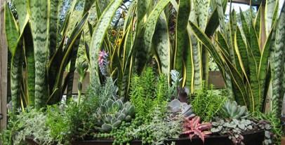 indoor_plant_sale
