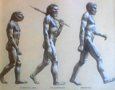 Evolution Std.Jpg