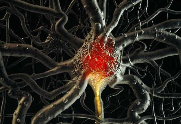 Brain-Cells-Neurons-Time 21689 600X450
