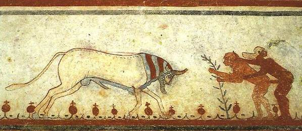 D1 Tarquinia-Bull