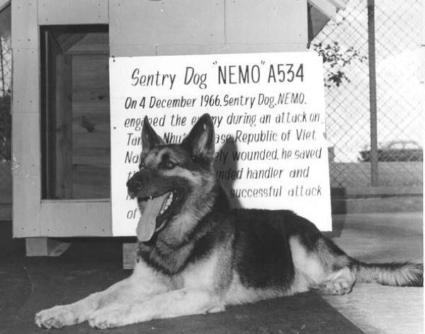 Nemo-War-Dog