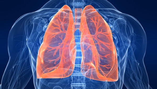 Lungs 1
