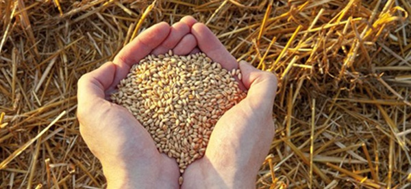Seed Grain Img 22Nov