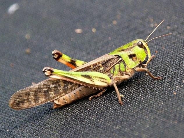 Çatalca Böcek İlaçlama Serivis