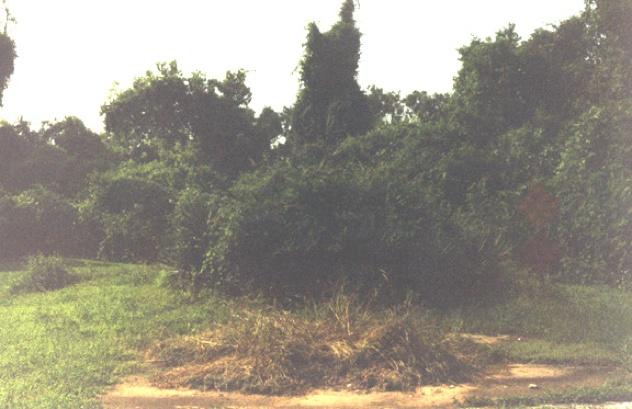 Bells Crossing Brush 1