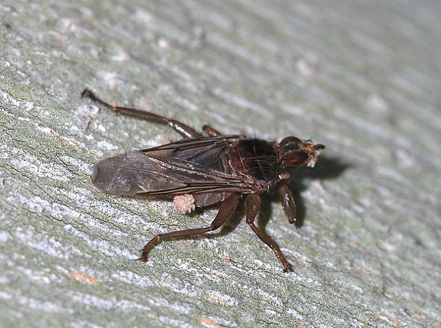 640px-Fly_June_2008-2