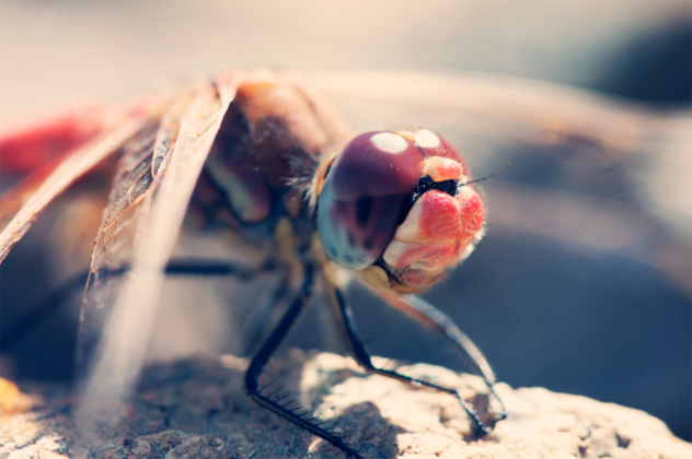 3- dragonfly