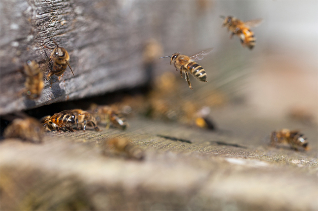 6- bees2