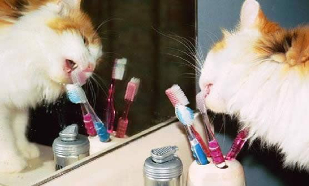 cat_toothbrush
