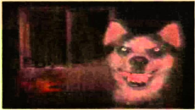 9- dog