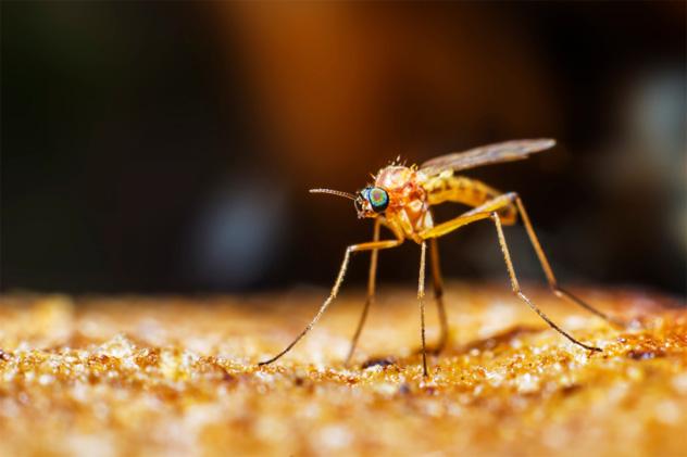 9- mosquito