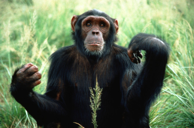 Evolutionary History of Chimpanzees Inferred from Complete Mitochondrial Genomes