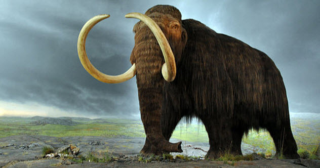 2-woolly-mammoth