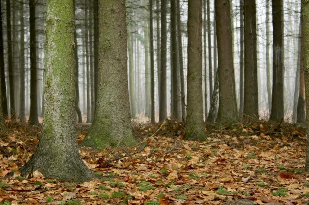 7a-misty-woods_000004885310_Small