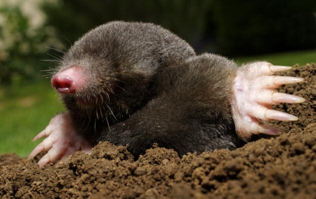 7-mole_000020821579_Small