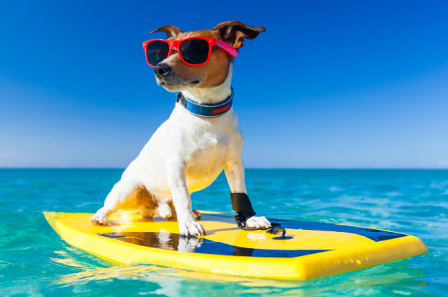 7-surfer-dog_000049245308_Small