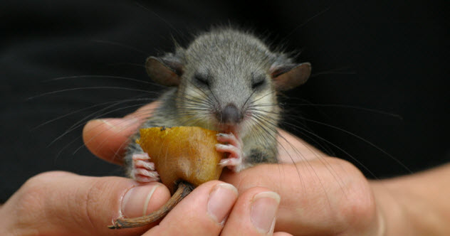 8-mouse-tasting-food_000004774710_Small