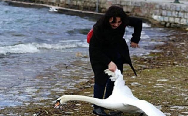 5-selfie-with-swan
