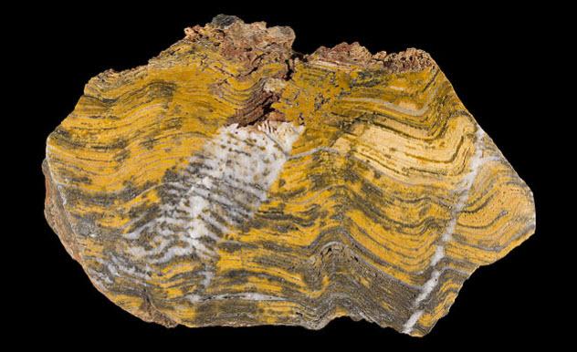 Veja os 10 primeiros fósseis significantes