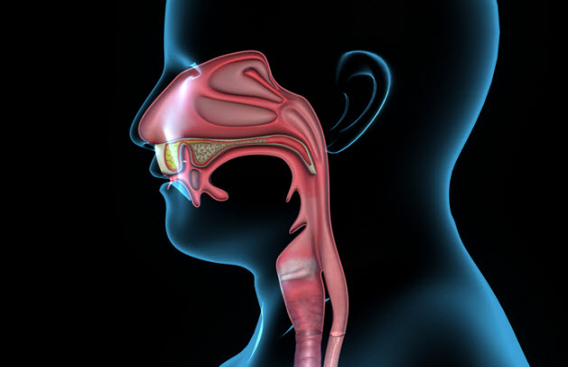 7-mouth-anatomy_43057342_SMALL