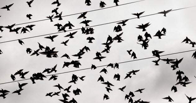 10b-crows