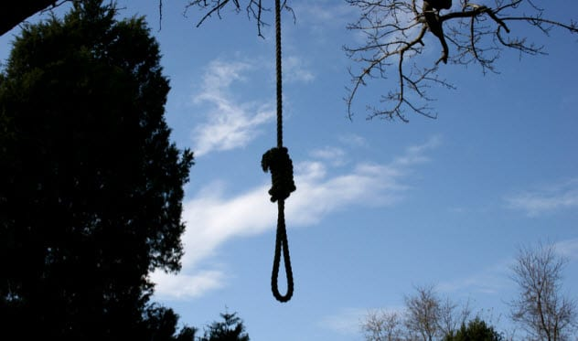 8a-hanging-tree_1970753_SMALL