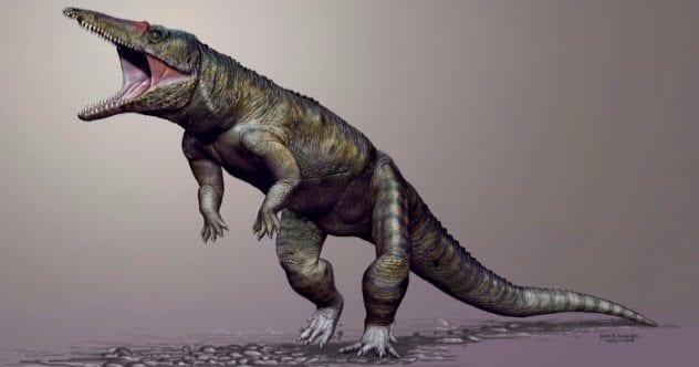 6a-butcher-crocodile