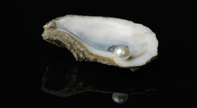 6a-pearl-in-oyster-shell-121119237