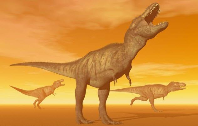 9b-3-t-rexes-453877581