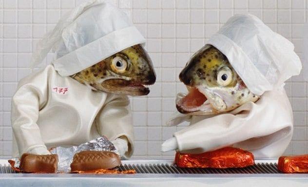 fish-head-diorama