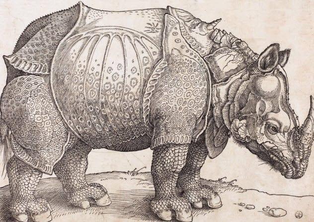 7-rhinoceros-in-armor