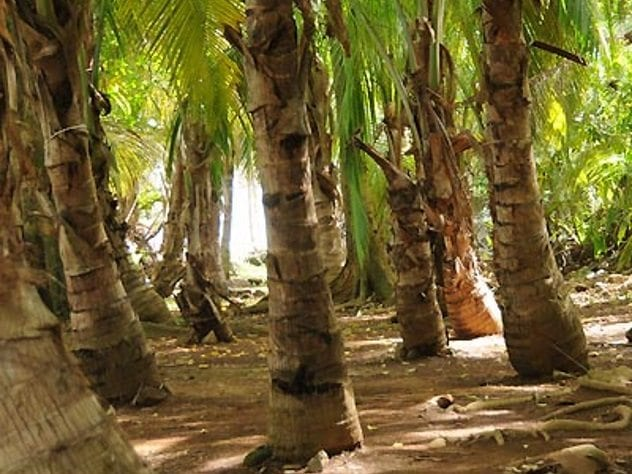 Devil's Island Trees