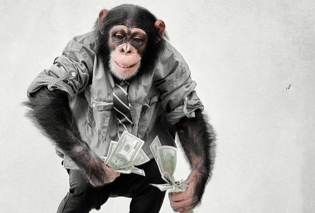 7-monkey-with-cash