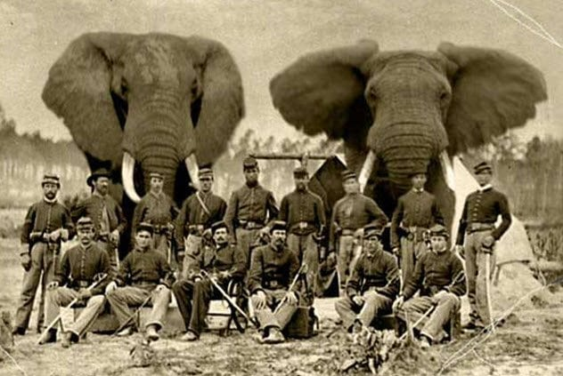 8-civil-war-elephants