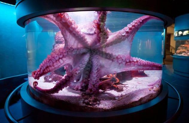octopustank