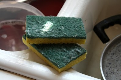 Sanitizing your kitchen sponge