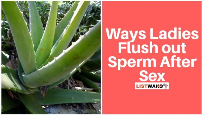 Aloe vera is also used by ladies to flush out sperm after sex